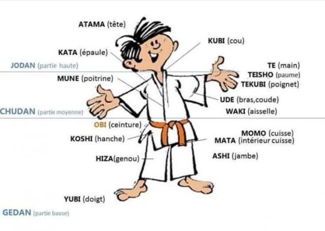 Un peu d'anatomie Japonaise